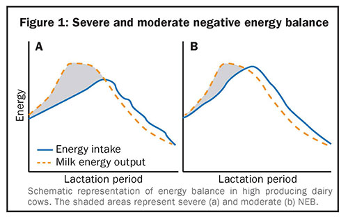 Severe and moderate negative energy balance
