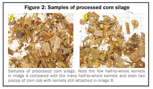 Samples of processed corn silage