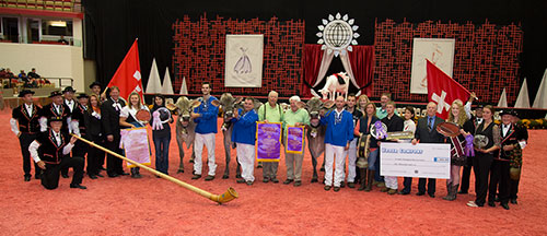 International Brown Swiss Show