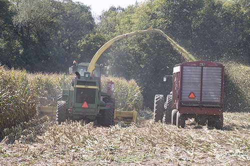 corn silage harvest