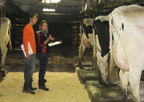 teaching dairy youth