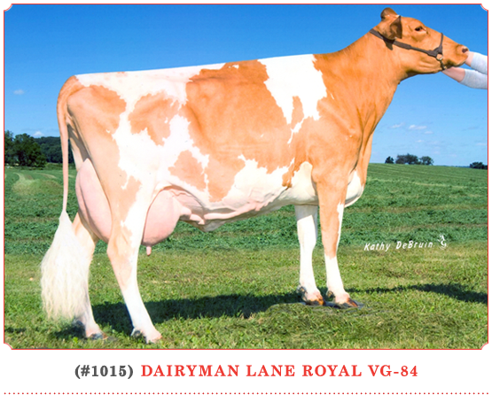 Dairyman Lane Royal